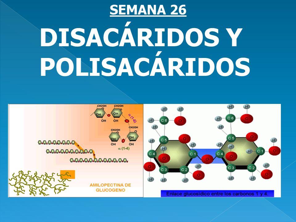 DISACÁRIDOS Y POLISACÁRIDOS SEMANA 26