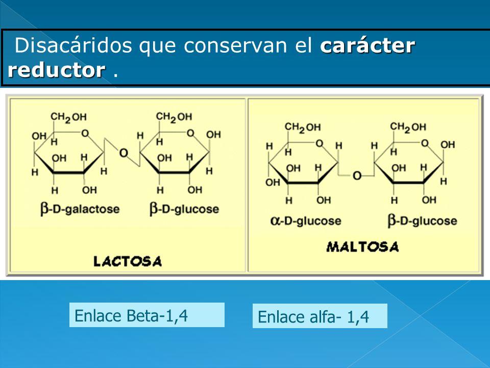 carácter reductor Disacáridos que conservan el carácter reductor. Enlace alfa- 1,4 Enlace Beta-1,4