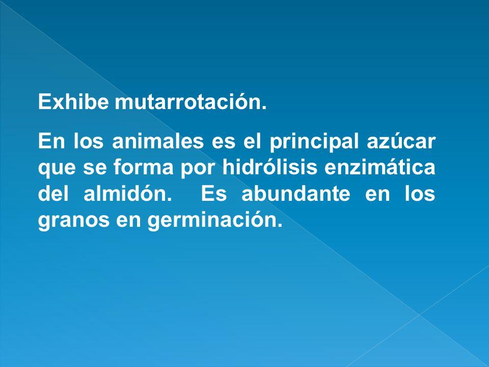 Exhibe mutarrotación. En los animales es el principal azúcar que se forma por hidrólisis enzimática del almidón. Es abundante en los granos en germina