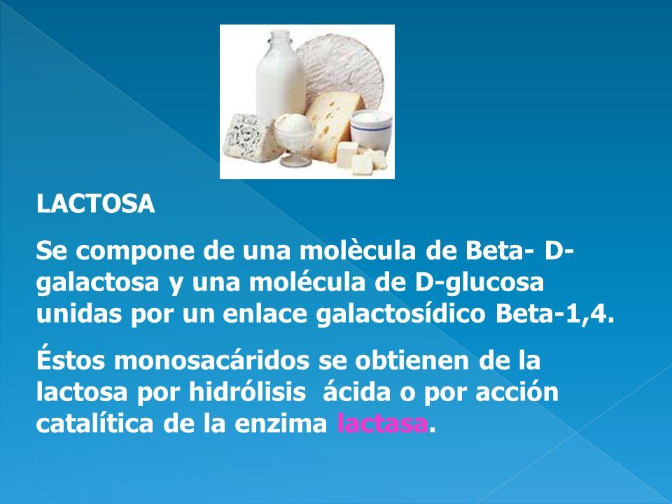 LACTOSA Se compone de una molècula de Beta- D- galactosa y una molécula de D-glucosa unidas por un enlace galactosídico Beta-1,4. Éstos monosacáridos