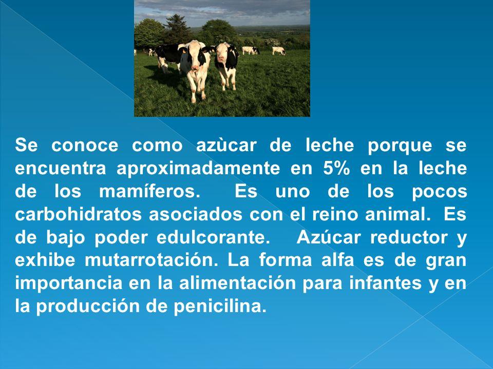 Se conoce como azùcar de leche porque se encuentra aproximadamente en 5% en la leche de los mamíferos. Es uno de los pocos carbohidratos asociados con