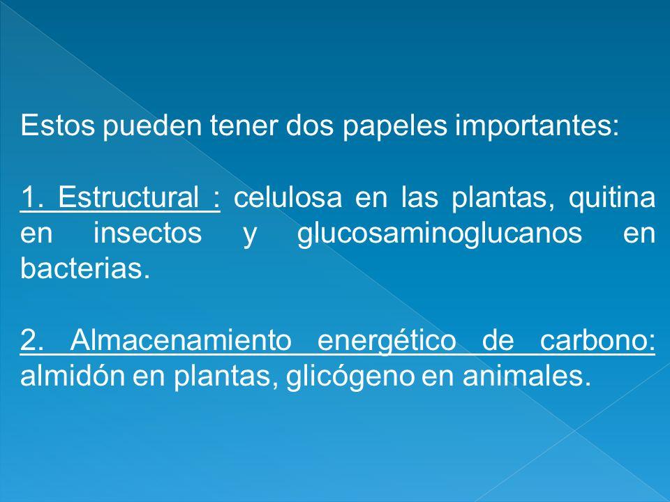 Estos pueden tener dos papeles importantes: 1. Estructural : celulosa en las plantas, quitina en insectos y glucosaminoglucanos en bacterias. 2. Almac