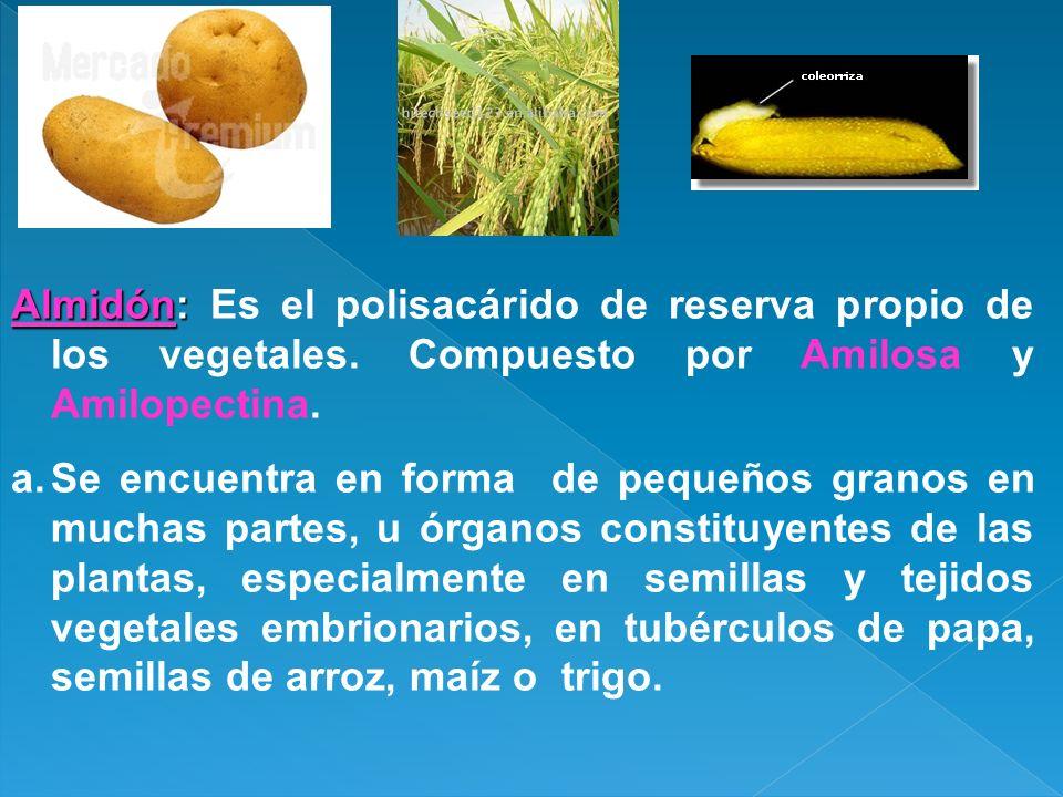 Almidón: Almidón: Es el polisacárido de reserva propio de los vegetales. Compuesto por Amilosa y Amilopectina. a.Se encuentra en forma de pequeños gra