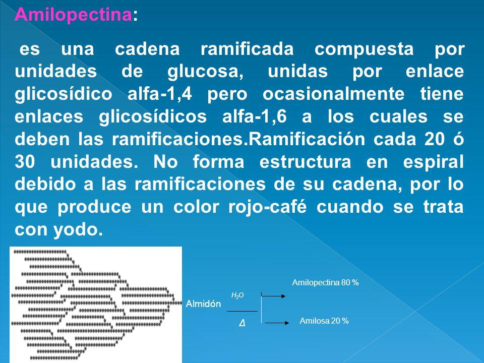 Amilopectina: es una cadena ramificada compuesta por unidades de glucosa, unidas por enlace glicosídico alfa-1,4 pero ocasionalmente tiene enlaces gli