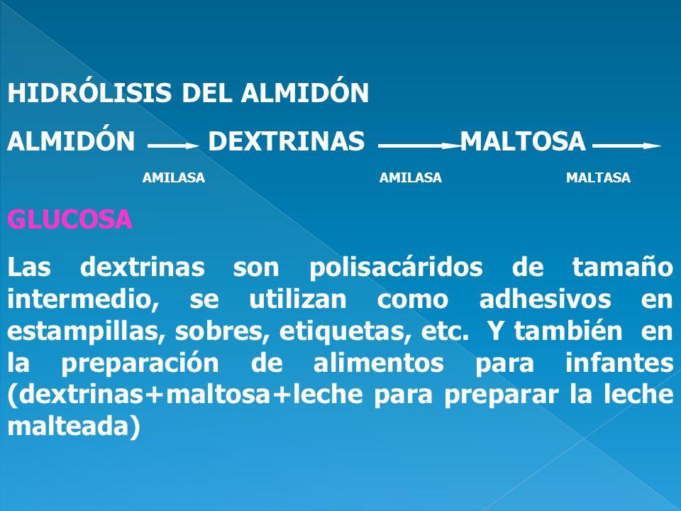 HIDRÓLISIS DEL ALMIDÓN ALMIDÓN DEXTRINAS MALTOSA AMILASA AMILASA MALTASA GLUCOSA Las dextrinas son polisacáridos de tamaño intermedio, se utilizan com