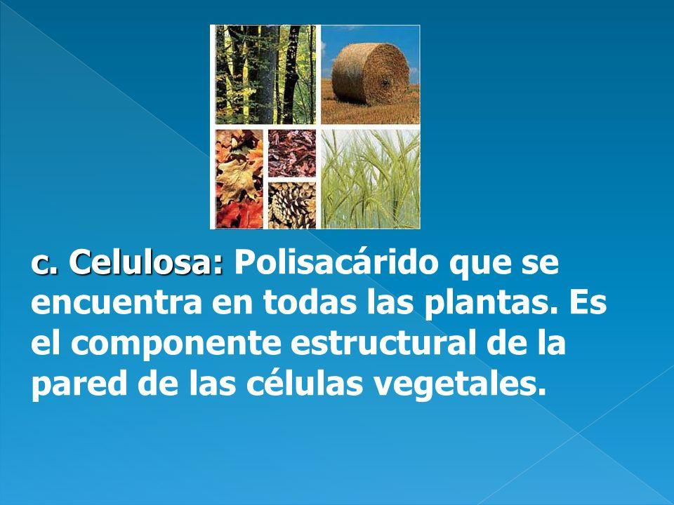 c. Celulosa: c. Celulosa: Polisacárido que se encuentra en todas las plantas. Es el componente estructural de la pared de las células vegetales.