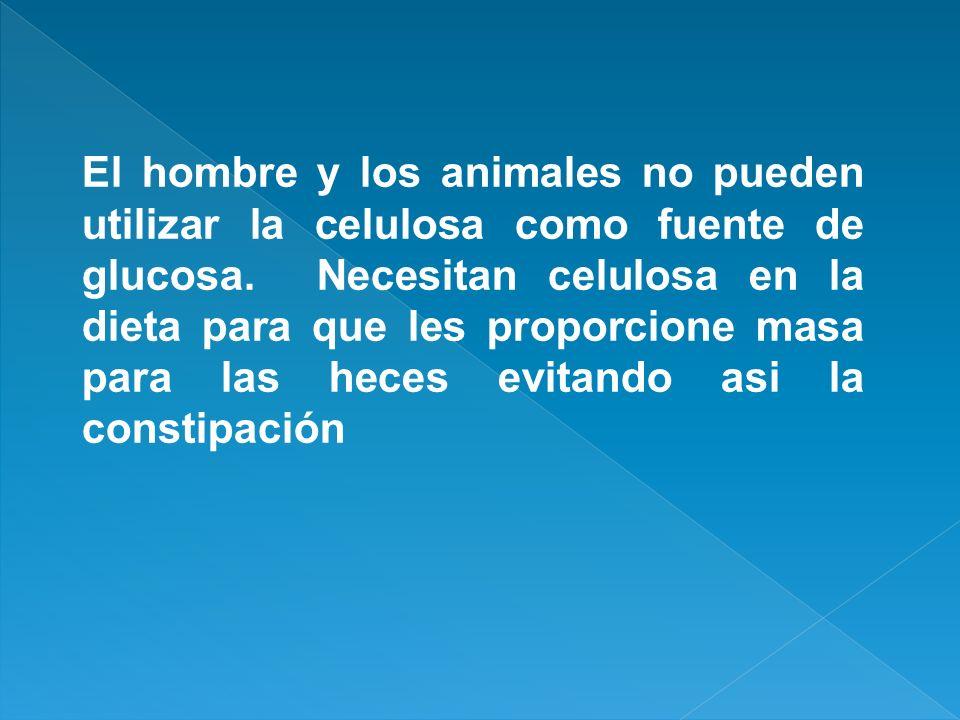 El hombre y los animales no pueden utilizar la celulosa como fuente de glucosa. Necesitan celulosa en la dieta para que les proporcione masa para las