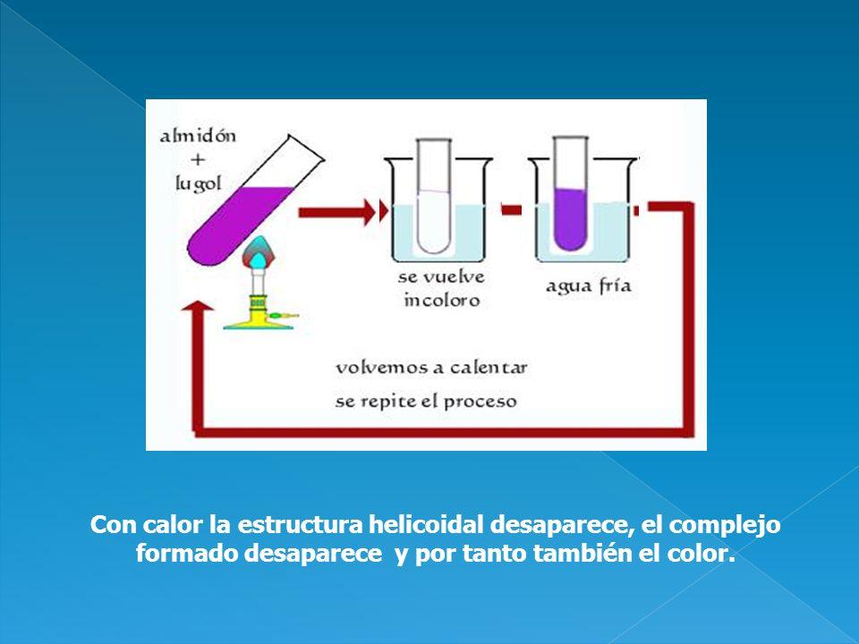 Con calor la estructura helicoidal desaparece, el complejo formado desaparece y por tanto también el color.