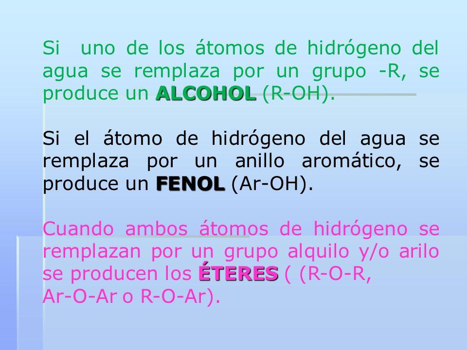 ALCOHOL Si uno de los átomos de hidrógeno del agua se remplaza por un grupo -R, se produce un ALCOHOL (R-OH). FENOL Si el átomo de hidrógeno del agua