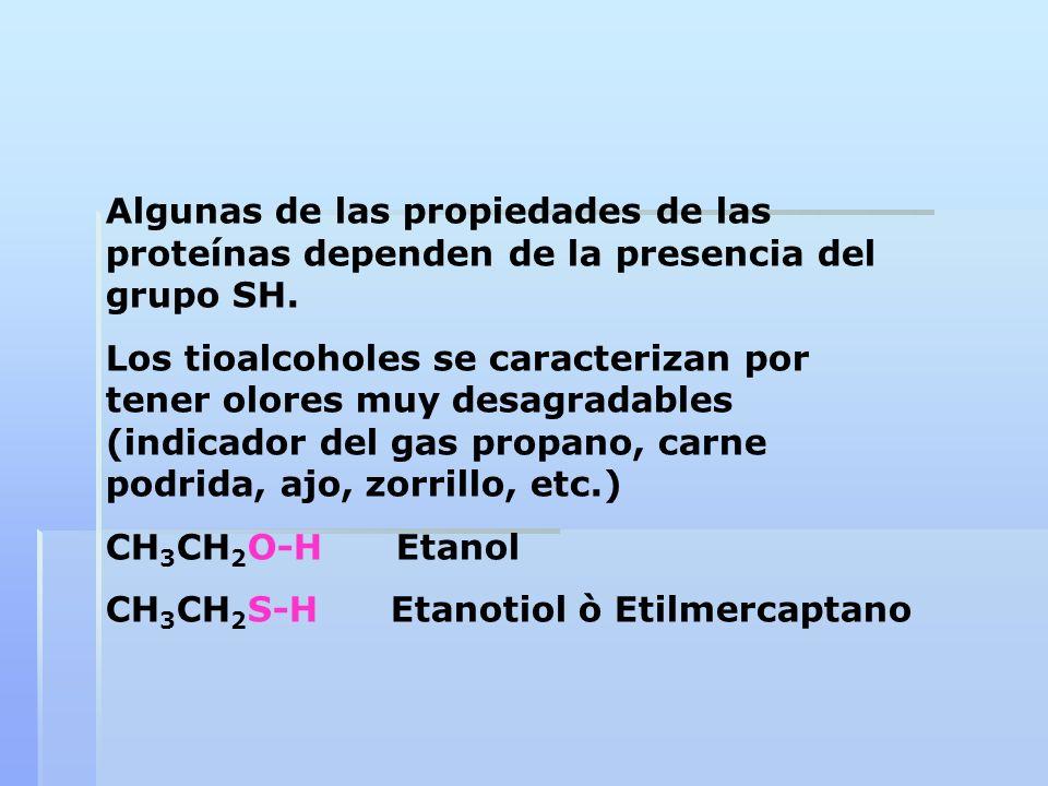 Algunas de las propiedades de las proteínas dependen de la presencia del grupo SH. Los tioalcoholes se caracterizan por tener olores muy desagradables