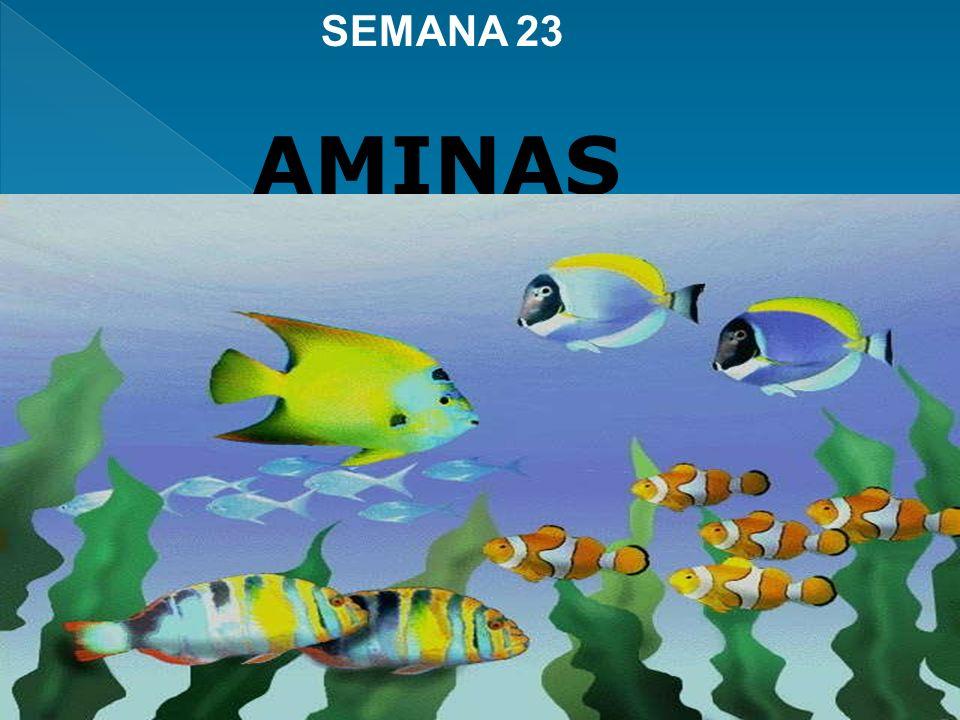amoníaco La sustitución de uno o más átomos de hidrógeno del amoníaco AMINAS por grupos alquílicos o arílicos da lugar a las AMINAS