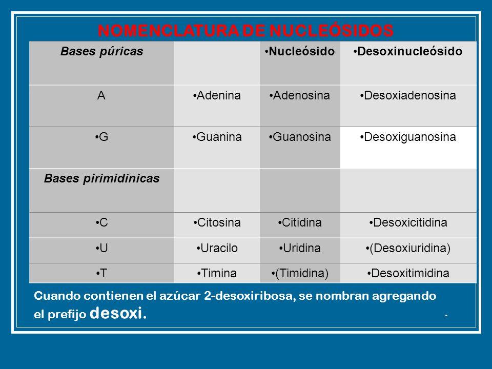 Bases púricasNucleósidoDesoxinucleósido AAdeninaAdenosinaDesoxiadenosina GGuaninaGuanosinaDesoxiguanosina Bases pirimidinicas CCitosinaCitidinaDesoxic