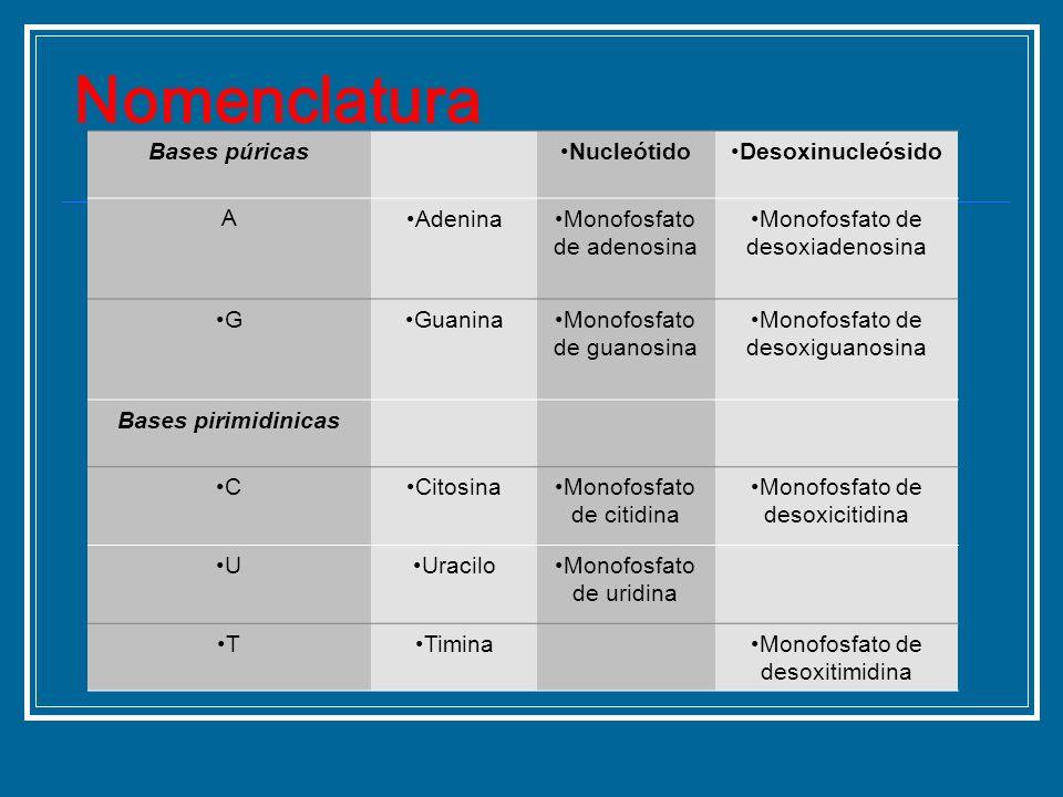 Bases púricasNucleótidoDesoxinucleósido AAdeninaMonofosfato de adenosina Monofosfato de desoxiadenosina GGuaninaMonofosfato de guanosina Monofosfato d
