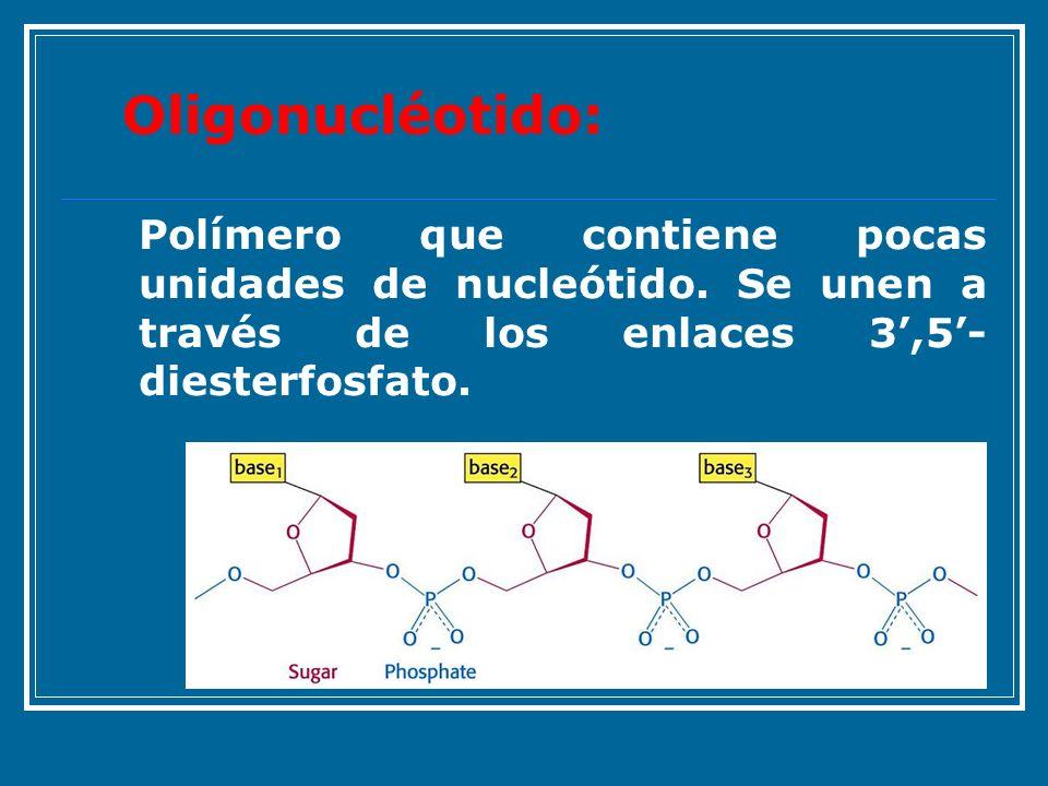 Polímero que contiene pocas unidades de nucleótido. Se unen a través de los enlaces 3,5- diesterfosfato. Oligonucléotido: