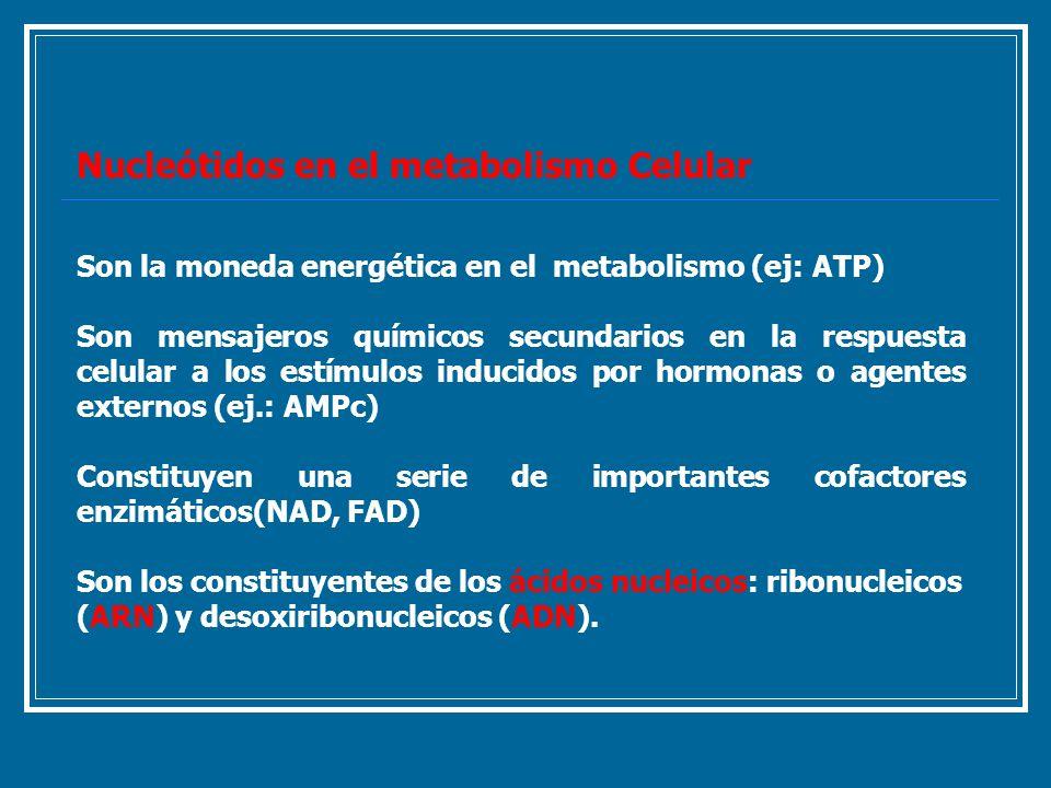 Nucleótidos en el metabolismo Celular Son la moneda energética en el metabolismo (ej: ATP) Son mensajeros químicos secundarios en la respuesta celular