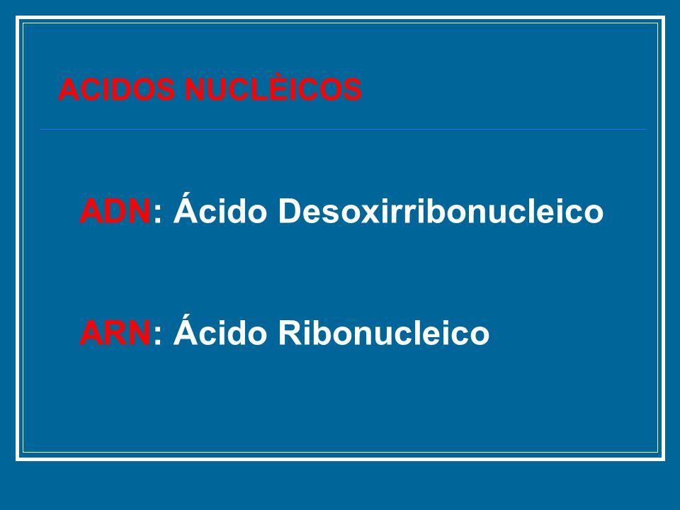 ACIDOS NUCLÈICOS ADN: Ácido Desoxirribonucleico ARN: Ácido Ribonucleico