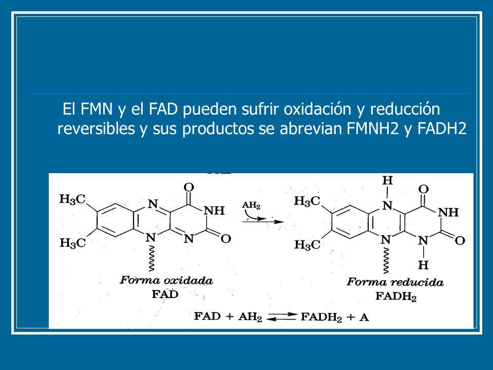El FMN y el FAD pueden sufrir oxidación y reducción reversibles y sus productos se abrevian FMNH2 y FADH2