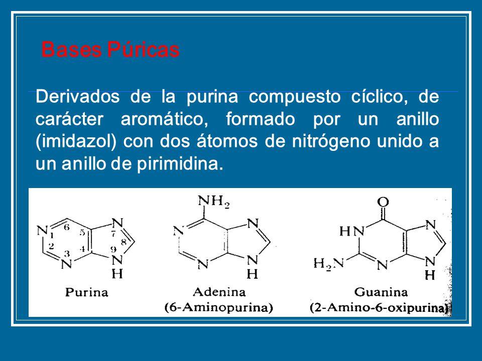 Derivados de la purina compuesto cíclico, de carácter aromático, formado por un anillo (imidazol) con dos átomos de nitrógeno unido a un anillo de pir