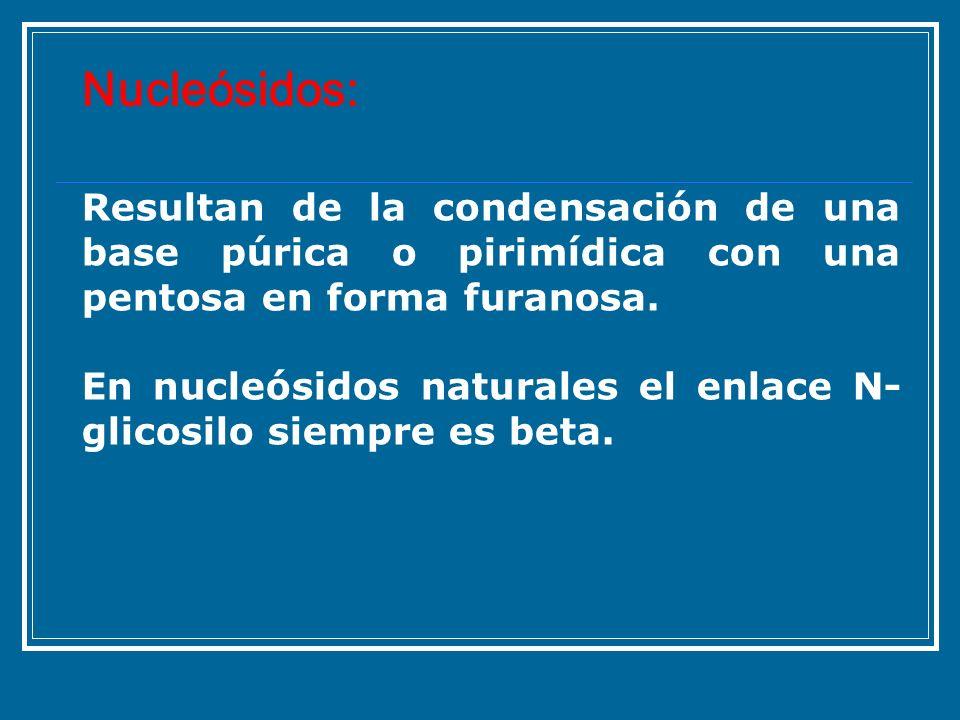 Resultan de la condensación de una base púrica o pirimídica con una pentosa en forma furanosa. En nucleósidos naturales el enlace N- glicosilo siempre