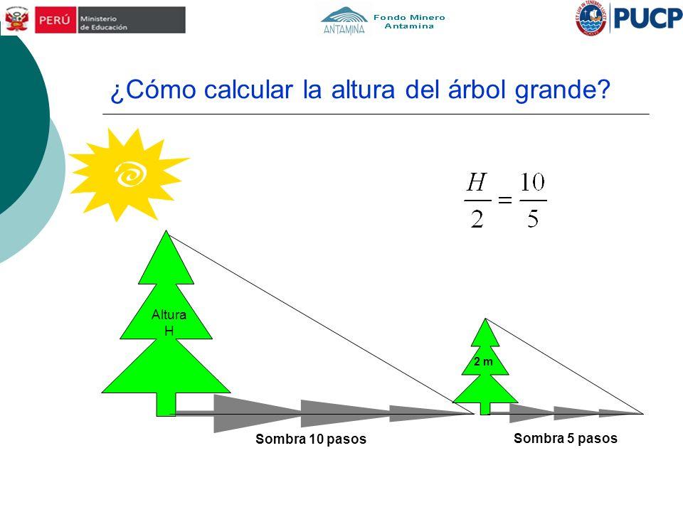 ¿Cómo calcular la altura del árbol grande? Sombra 5 pasos Sombra 10 pasos 2 m Altura H