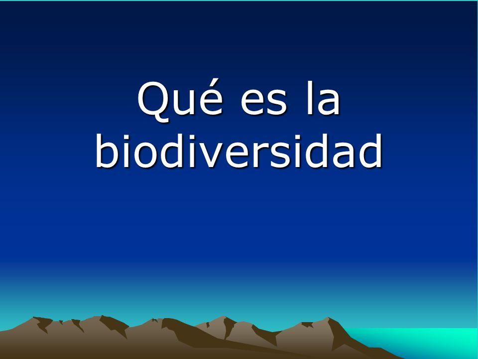 Creado por los gobiernos de Centroamérica, que asumen el reto de desarrollar el Corredor Biológico Mesoamericano (CBM)