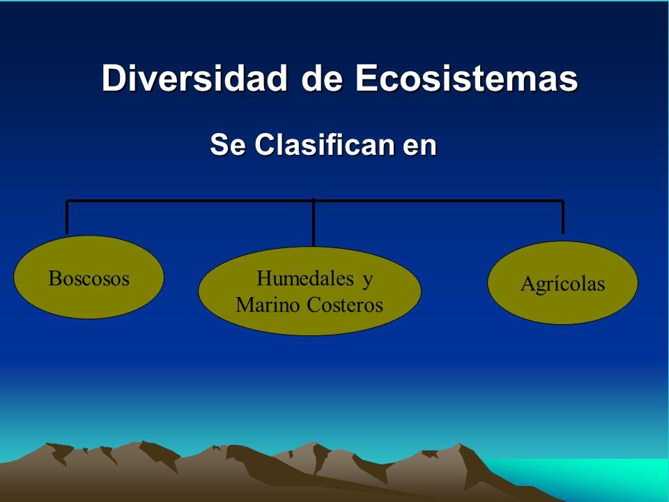 Diversidad de Ecosistemas Se Clasifican en Boscosos Humedales y Marino Costeros Agrícolas