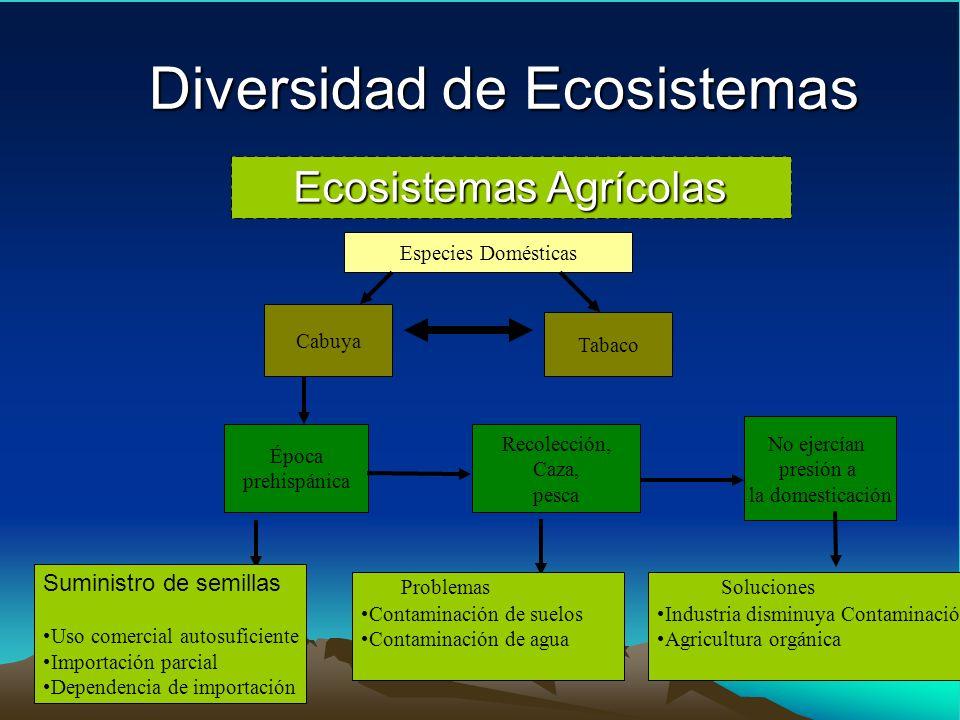 Diversidad de Ecosistemas Ecosistemas Agrícolas Cabuya Tabaco Especies Domésticas Época prehispánica Recolección, Caza, pesca No ejercían presión a la