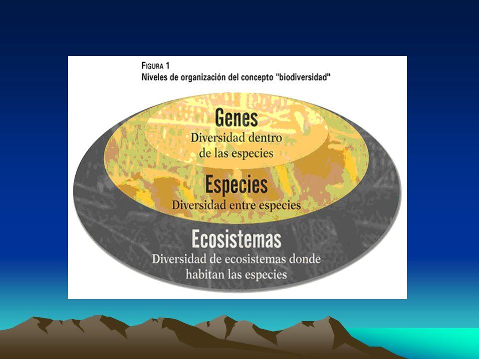 Diversidad Genética La diversidad genética de una especie es fundamental para su adaptación a los cambios en el ambiente.