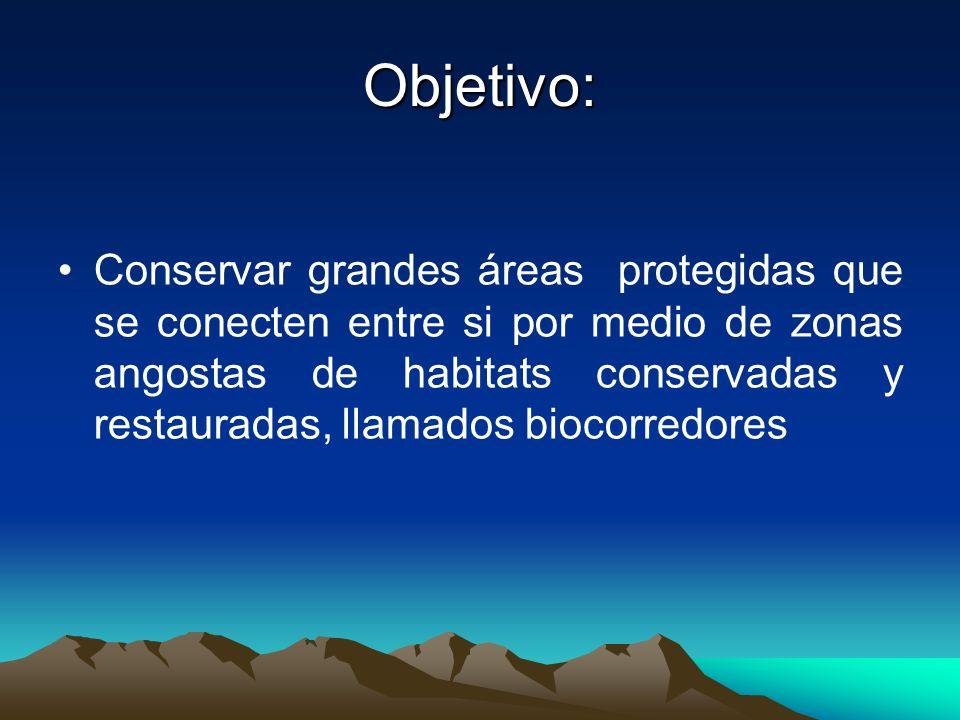 Objetivo: Conservar grandes áreas protegidas que se conecten entre si por medio de zonas angostas de habitats conservadas y restauradas, llamados bioc