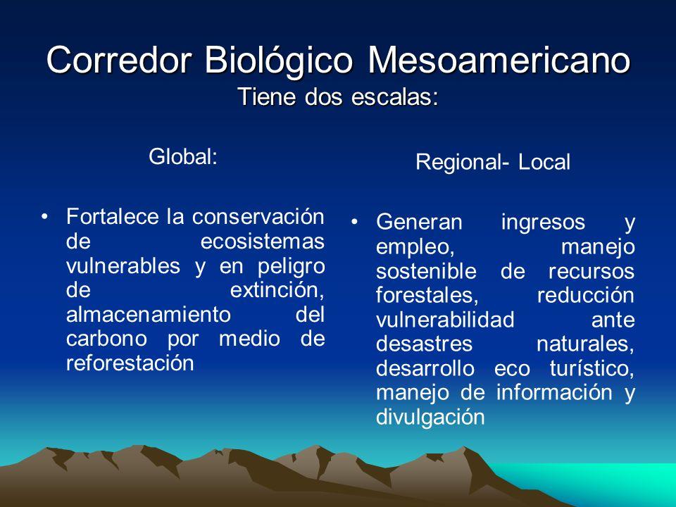 Corredor Biológico Mesoamericano Tiene dos escalas: Global: Fortalece la conservación de ecosistemas vulnerables y en peligro de extinción, almacenami