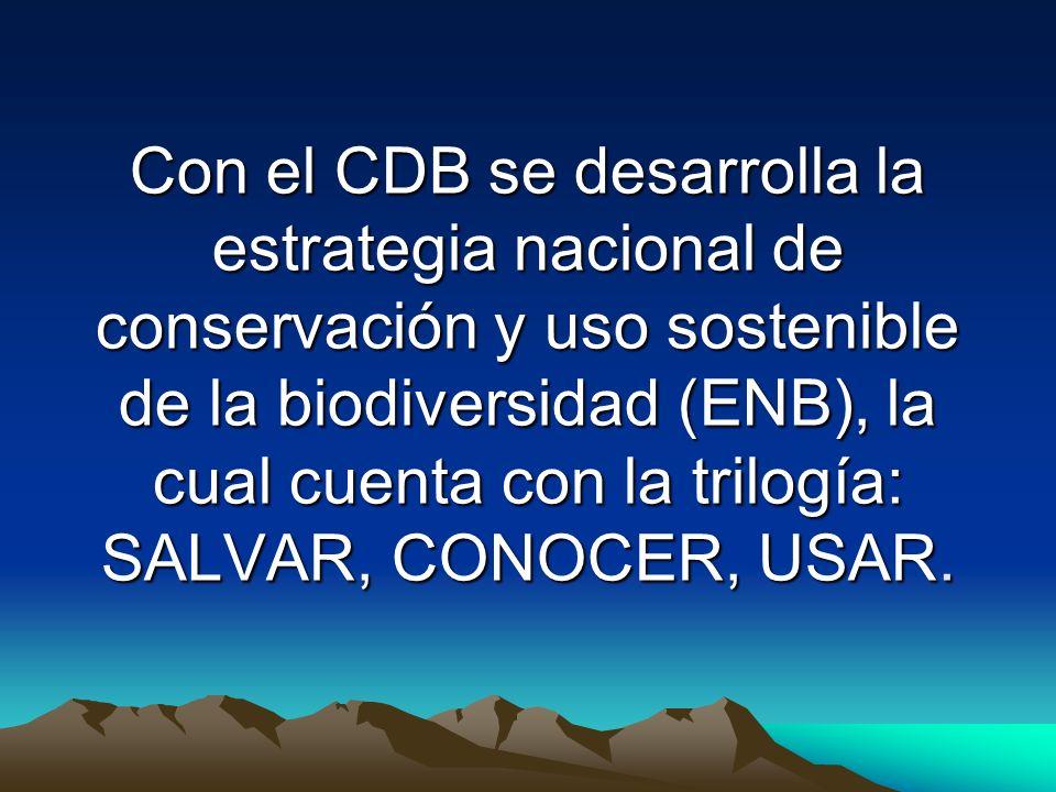 Con el CDB se desarrolla la estrategia nacional de conservación y uso sostenible de la biodiversidad (ENB), la cual cuenta con la trilogía: SALVAR, CO