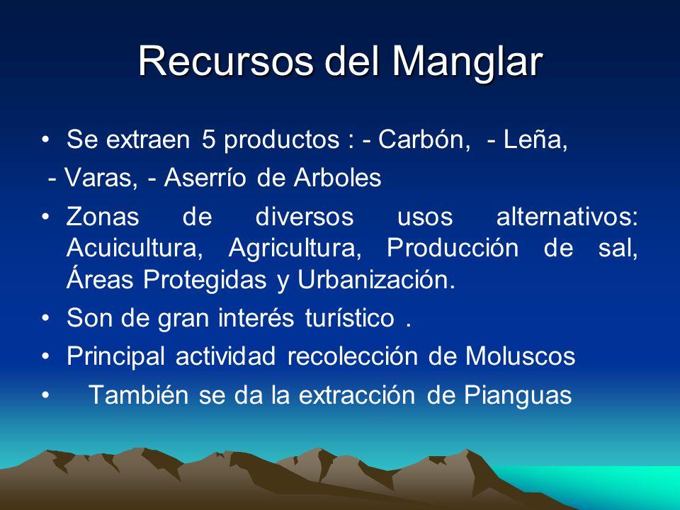 Recursos del Manglar Se extraen 5 productos : - Carbón, - Leña, - Varas, - Aserrío de Arboles Zonas de diversos usos alternativos: Acuicultura, Agricu