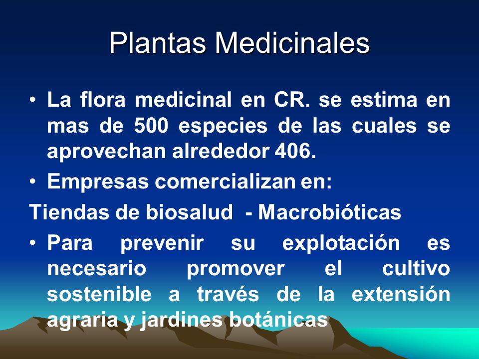 Plantas Medicinales La flora medicinal en CR. se estima en mas de 500 especies de las cuales se aprovechan alrededor 406. Empresas comercializan en: T