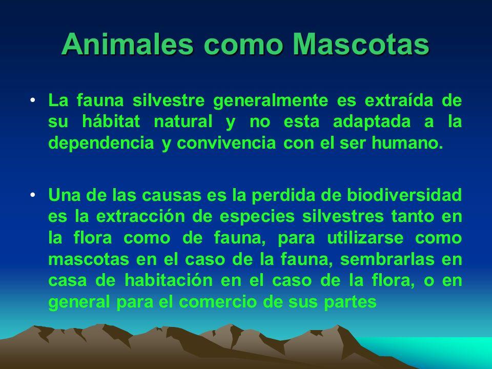 Animales como Mascotas La fauna silvestre generalmente es extraída de su hábitat natural y no esta adaptada a la dependencia y convivencia con el ser