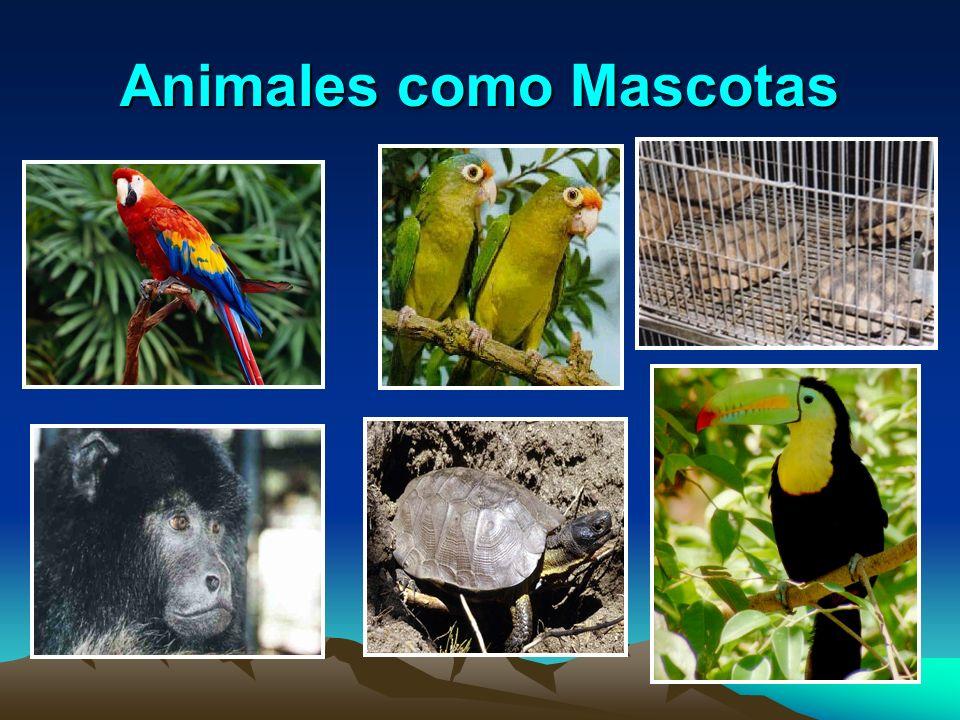 Animales como Mascotas
