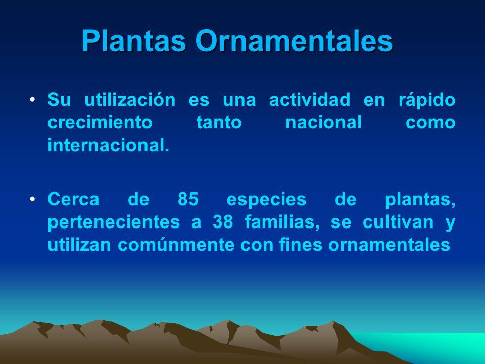 Plantas Ornamentales Su utilización es una actividad en rápido crecimiento tanto nacional como internacional. Cerca de 85 especies de plantas, pertene