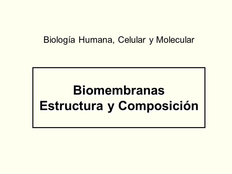 Biomembranas Estructura y Composición Biología Humana, Celular y Molecular