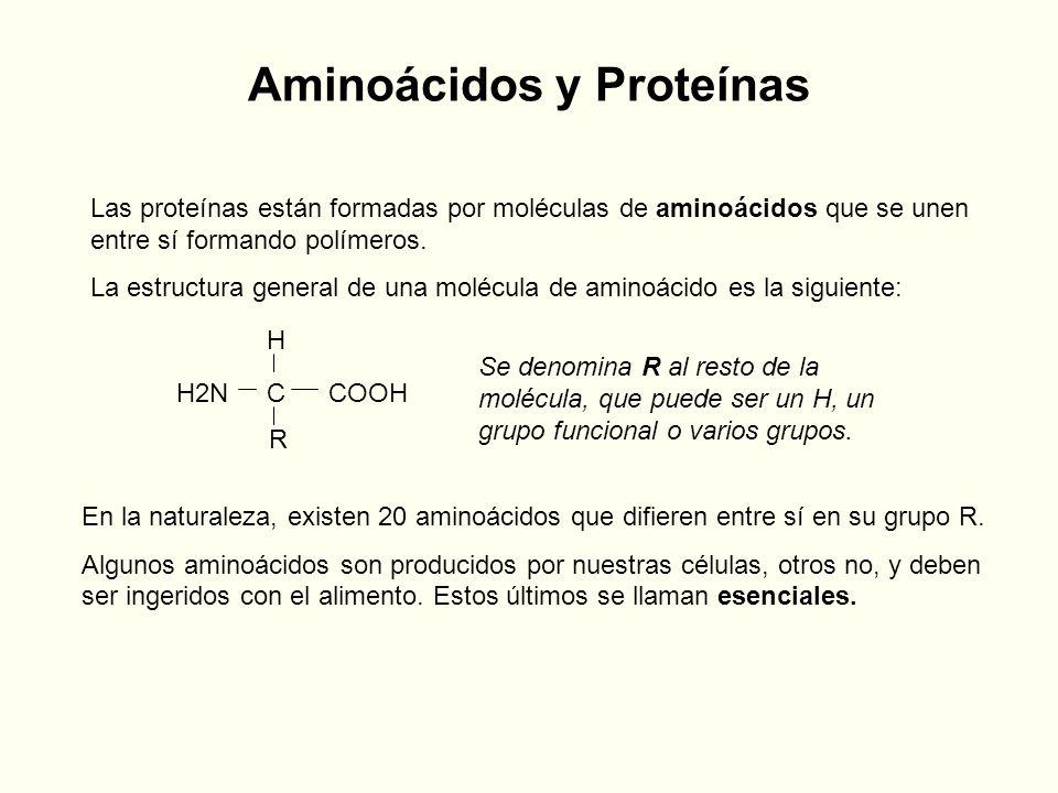 Aminoácidos y Proteínas Las proteínas están formadas por moléculas de aminoácidos que se unen entre sí formando polímeros. La estructura general de un