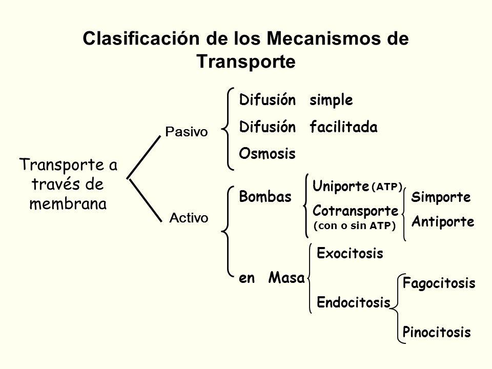 Uniporte Cotransporte Bombas en Masa Clasificación de los Mecanismos de Transporte Transporte a través de membrana Pasivo Activo Difusión simple Difus