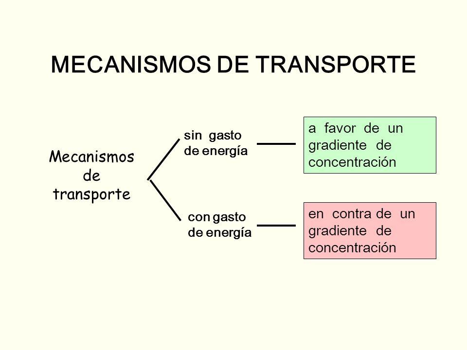 MECANISMOS DE TRANSPORTE Mecanismos de transporte sin gasto de energía con gasto de energía a favor de un gradiente de concentración en contra de un g