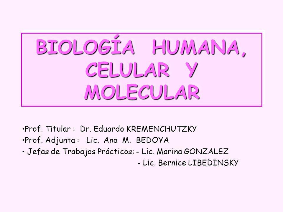 BIOLOGÍA HUMANA, CELULAR Y MOLECULAR Prof. Titular : Dr. Eduardo KREMENCHUTZKYProf. Titular : Dr. Eduardo KREMENCHUTZKY Prof. Adjunta : Lic. Ana M. BE