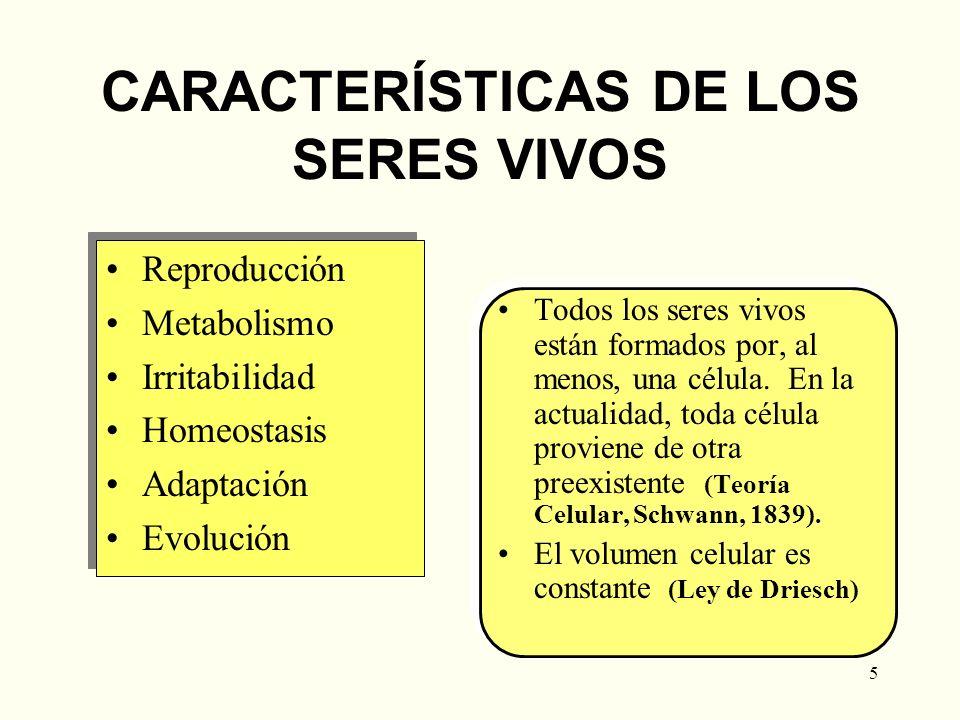 5 CARACTERÍSTICAS DE LOS SERES VIVOS Reproducción Metabolismo Irritabilidad Homeostasis Adaptación Evolución Reproducción Metabolismo Irritabilidad Ho