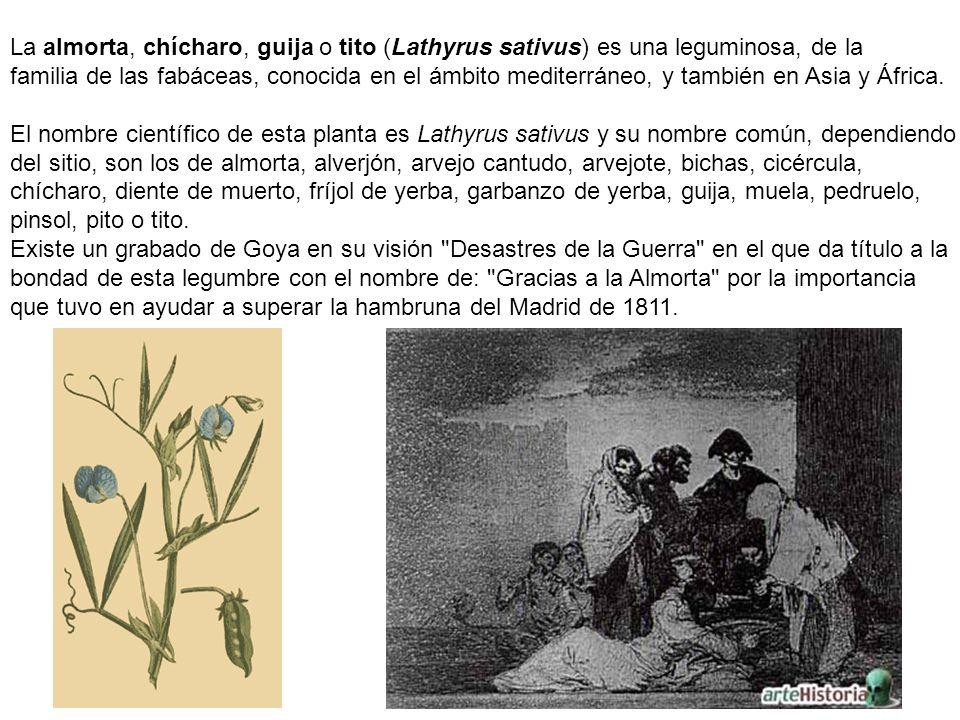 La tagarnina o cardillo espinoso (Scolymus hispanicus) es una planta nativa del surde Europa.