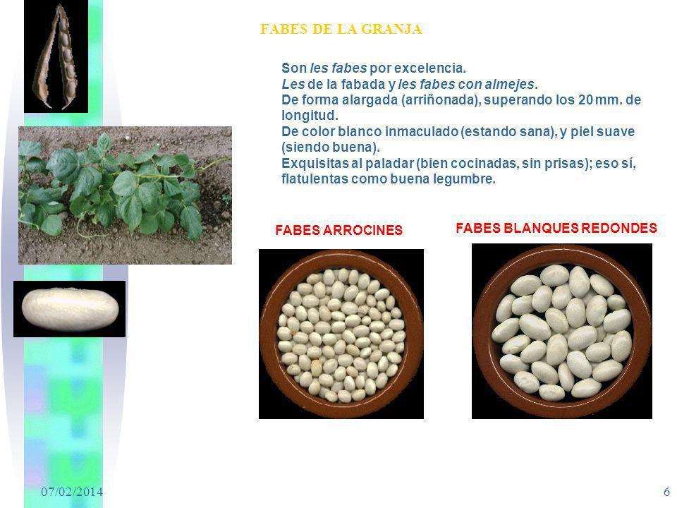 07/02/2014 6 FABES DE LA GRANJA Son les fabes por excelencia. Les de la fabada y les fabes con almejes. De forma alargada (arriñonada), superando los