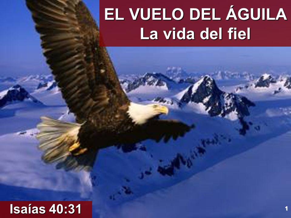 12 CONCLUSIÓN.A.El águila se esfuerza para tomar altura.