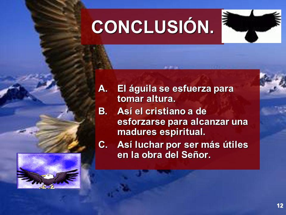 12 CONCLUSIÓN. A.El águila se esfuerza para tomar altura. B.Así el cristiano a de esforzarse para alcanzar una madures espiritual. C.Así luchar por se