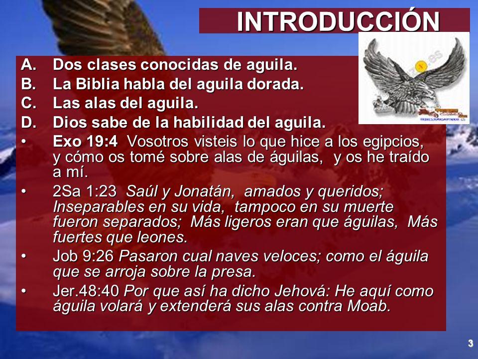 3 INTRODUCCIÓN INTRODUCCIÓN A.Dos clases conocidas de aguila. B.La Biblia habla del aguila dorada. C.Las alas del aguila. D.Dios sabe de la habilidad