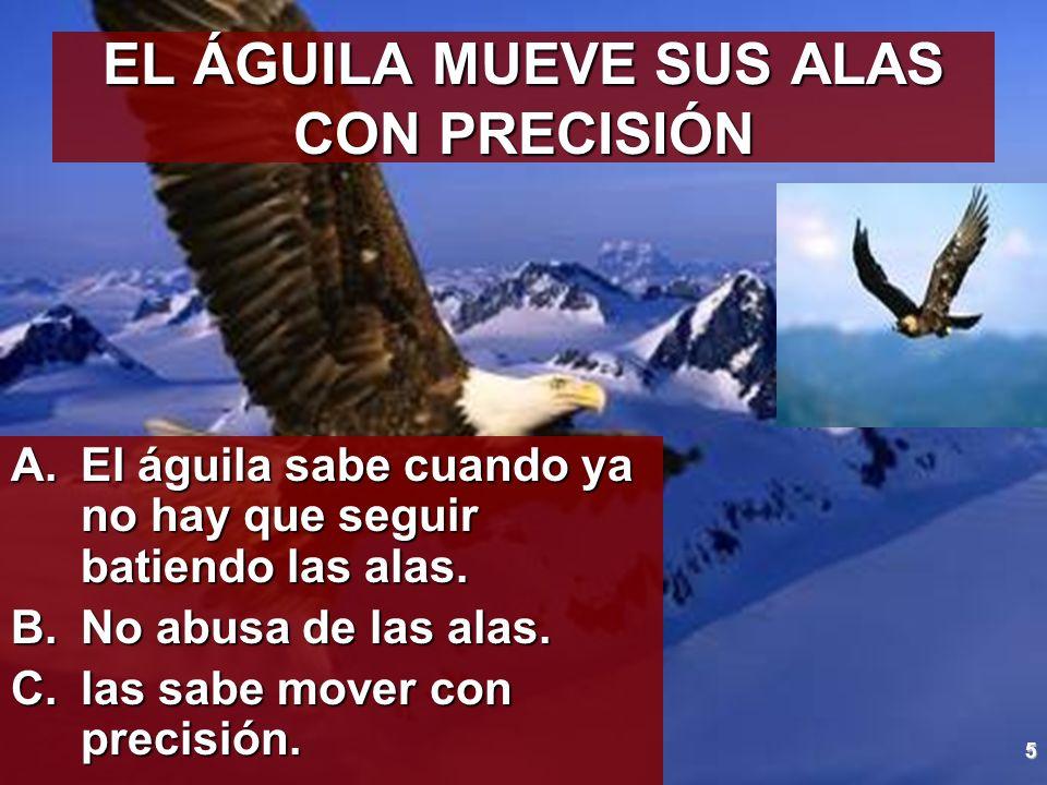 5 EL ÁGUILA MUEVE SUS ALAS CON PRECISIÓN A.El águila sabe cuando ya no hay que seguir batiendo las alas. B.No abusa de las alas. C.las sabe mover con