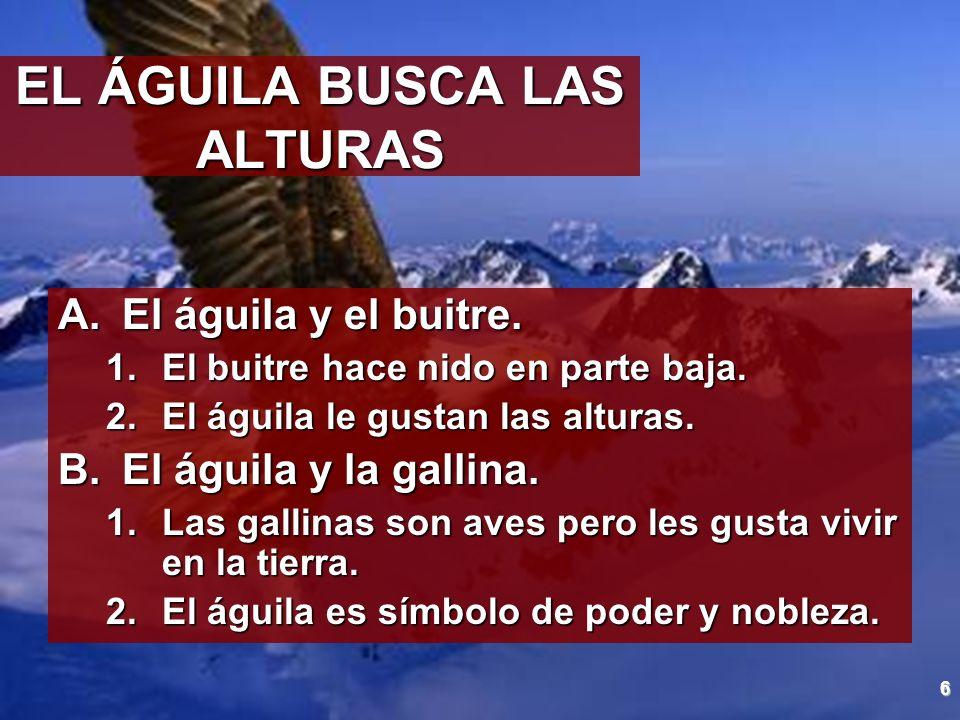 6 EL ÁGUILA BUSCA LAS ALTURAS A.El águila y el buitre. 1.El buitre hace nido en parte baja. 2.El águila le gustan las alturas. B.El águila y la gallin
