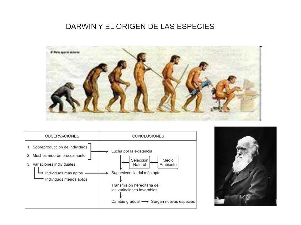 DARWIN Y EL ORIGEN DE LAS ESPECIES